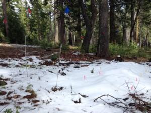 1 week after snow manipulations